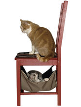 Cat hammock calin